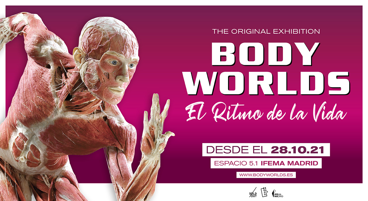 Body Worlds. El Ritmo de la Vida